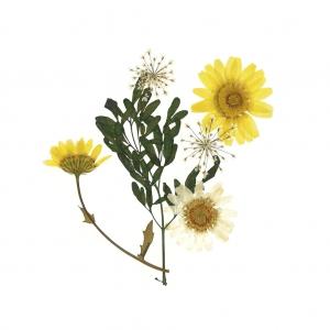 Assortiment De Fleurs Sechees Et Pressees Pour Creation Diy Pot