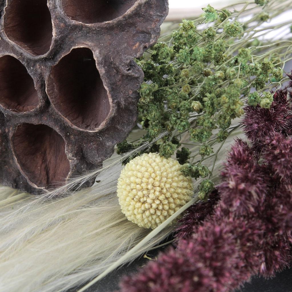 fleur de pavot rouge s ch e pour cr ation diy x1 tige. Black Bedroom Furniture Sets. Home Design Ideas