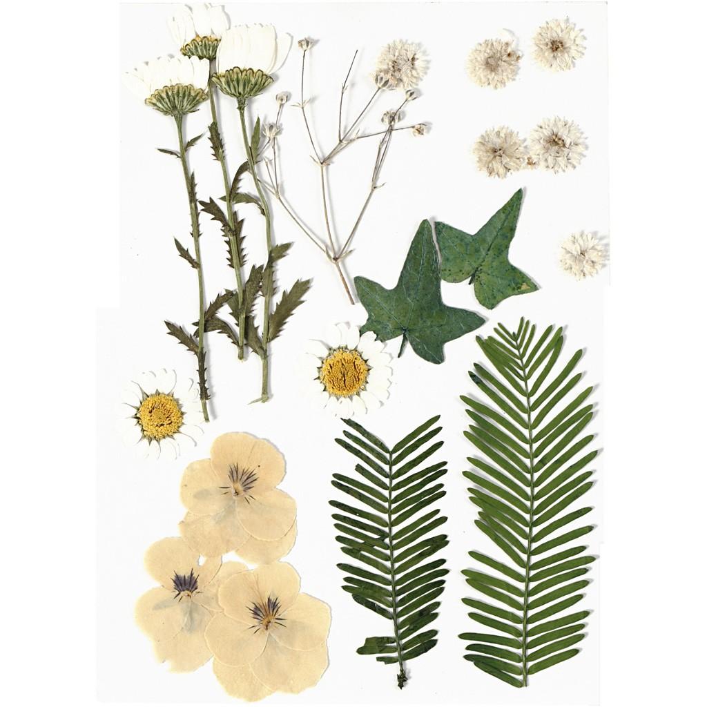 Comment Conserver Des Fleurs Séchées assortiment de fleurs séchées et pressées pour création diy - blanc x1